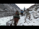 Снежный барс - ирбис. Алтай. Сибирские козлы, кабарга 2017