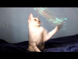 Игривая #пятница от котика #саваннаФ4 Гога Малый Лев 🐈 Playful #Friday from Savannah Goga Minilion Есть свободные котята !!!