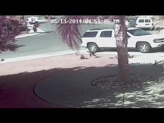 Кот-герой спас маленького мальчика от собаки!