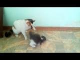 Котёнок и Ласка