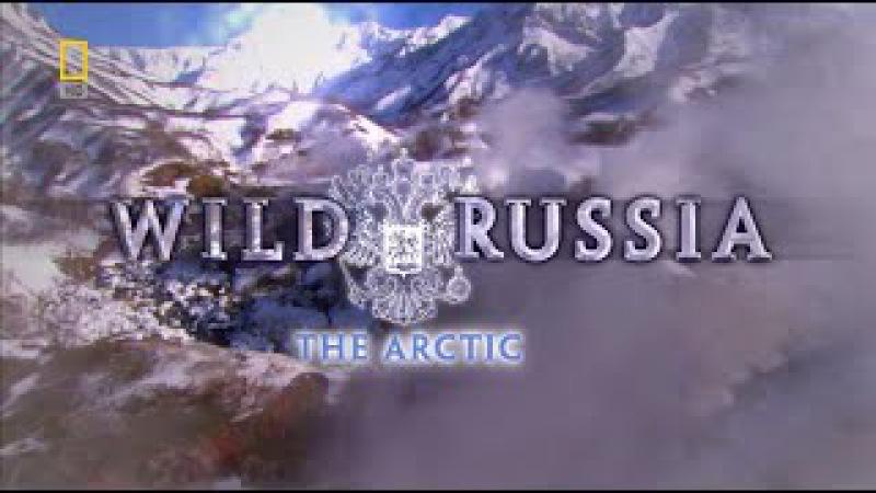 Vahşi Rusya Kutuplar (Belgesel)