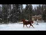 Winter walks Nause - Dynamite