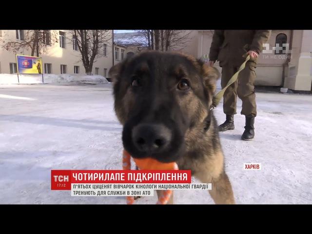 Харківським військовим волонтери подарували п'ятьох цуценят вівчарки
