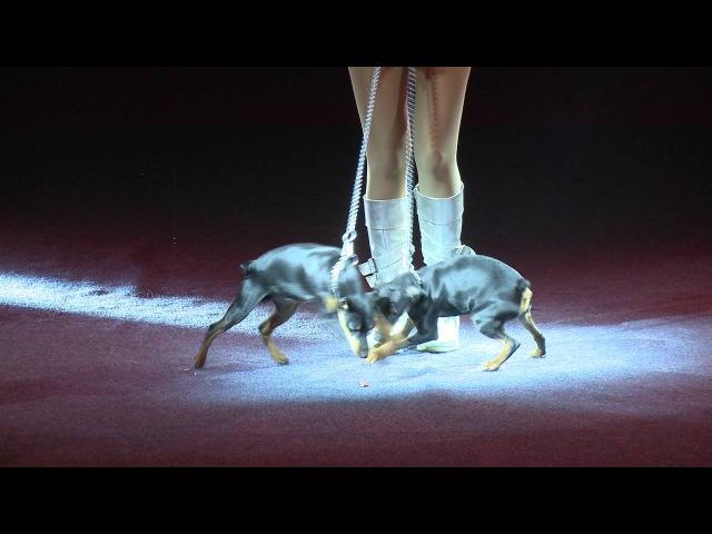 Иллюзионный аттракцион - призёр международных цирковых фестивалей Татьяна Кобзова (Украина)