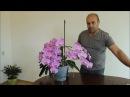 Орхидея. Как вырастить сильное здоровое растение. Часть вторая.