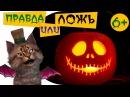 Самые страшные звуки животных Тесты для детей 6 Правда или ложь на Хеллоуин Познаватель кот Семен