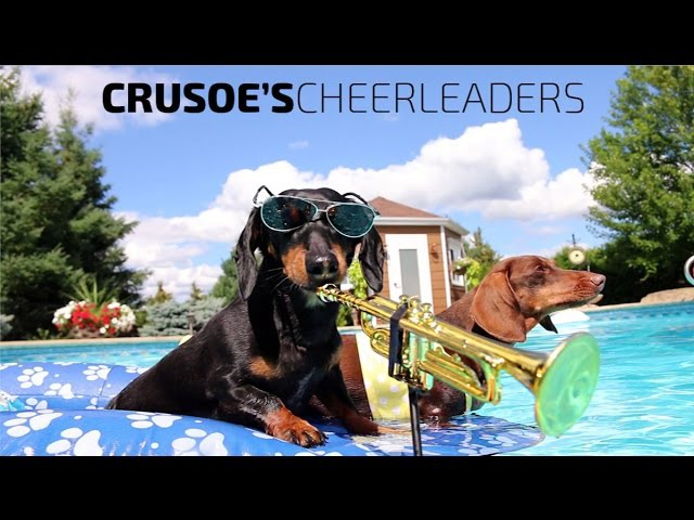 Crusoe's Cheerleaders - Dachshund Pool Party Music Video