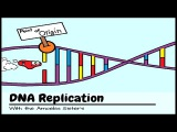 DNA Replication The Cell's Extreme Team Sport