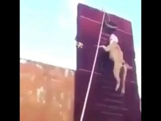 Попробуй убежать