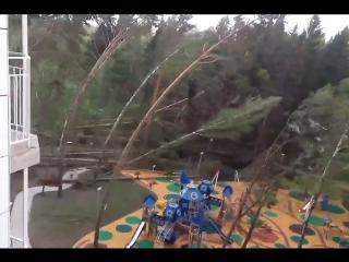 Ураган в Москве 29 мая: 11 погибших, десятки раненных, сотни машин завалены деревьями