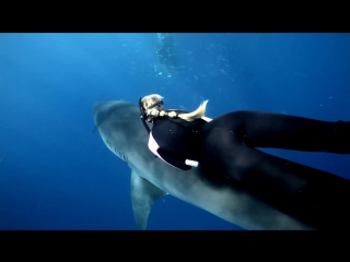 GoPro_ Ocean Ramsey and a Great White Shark