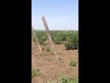 Взрываем петарды у мамы на винограднике (август 2013