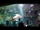 шоу кормление акул