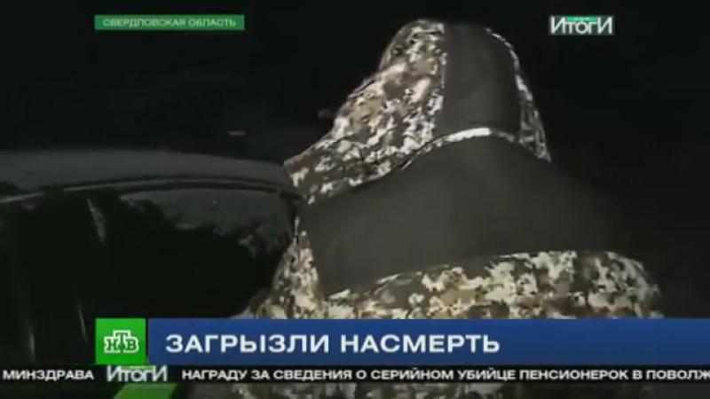 Страшная трагедия на Урале. В одной из деревень ребенка растерзали охотничьи псы.