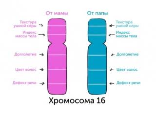 Генетика 101, часть 3_ откуда берутся ваши гены
