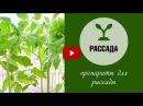 Уход за рассадой 🌱 Какие препараты использовать