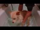 Персик. Занятия в ванной
