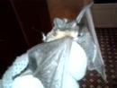 Стеша опять поймал летучую мышь