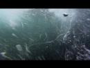07 BBC Голубая планета Приливные моря