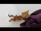 Кот играет с феном )) Прикол с котом Смешной кот