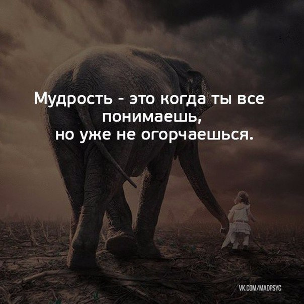 Фото №456289438 со страницы Елены Садртдиновой