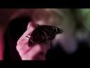 Cafe del Mar Viggo feat. Glow - Rivers flow