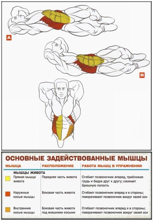 Анатомия + Упражнения для мышц живота