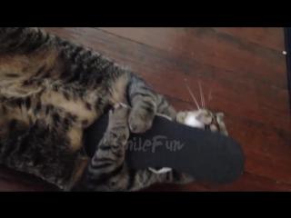 Приколы с Котами ДО СЛЁЗ Смешные коты и кошки 2017 (1)