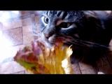 Мой кот кушает сухие листья