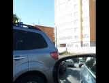 Баран прет по центру города.Неуловимый бараш в Иваново.