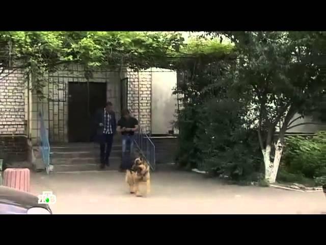 Возвращение Мухтара 9 сезон 87 серия - Родительский день