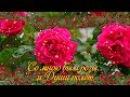 Красивой женщине! Пройдемте в сад? Я покажу вас розам