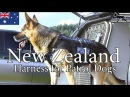 New Zealand Police is introducing a Multi-Purpose Harness for Patrol Dogs.