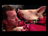 Esther the Wonder Pig Steve Jenkins &amp Derek Walter TEDxStLawrenceCollege
