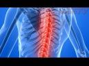 Висцеральная терапия и остеопатия. Представительные зоны внутренних органов.