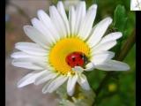Ц. А. Кюи. Коснулась я цветка (Е.Озимковская, ф-но Р.Эльвова)