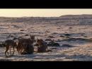 BBC: Жизнь / BBC: Life (2009) BDRip 720p - (7 серия - Охотники и жертвы)