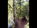 video-2015-09-23-10-45-55.mp4