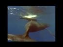 BBC Незримые силы природы 6 Близкие контакты Познавательный животные 1999