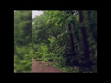 Москва.Последствия урагана.29.05.2017.Октябрьское поле