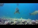 ARM Fishing Как клюёт карп под водой КАЧЕСТВЕННАЯ ПОДВОДНАЯ СЪЁМКА