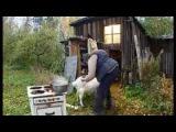 Видео прикол Модест и кулинария Городок, официальный сайт