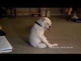 собакин блюз