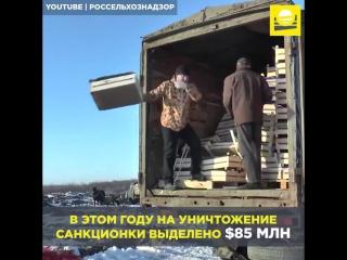 «Голод последнего времени будет еще хуже /чем при большевиках/ (о. Антоний Краснов).