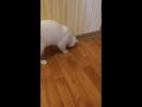 Кошка играет с жуком в городе Орел