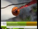 За сутки на Ямале потушено 32 пожара на площади больше 36 тысяч гектаров