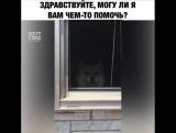 Приветливая собачка