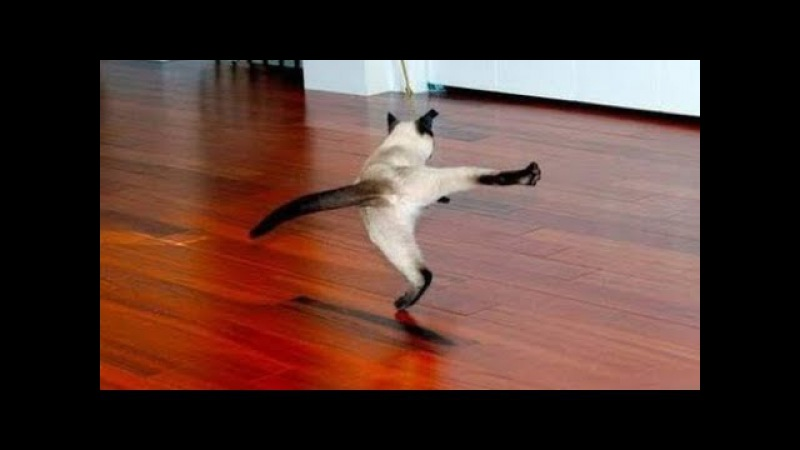 Супер Хит 90-х КОЛЯН ТАНЦУЕТ ЛУЧШЕ ВСЕХ – КОТ ТАНЦУЕТ ЛУЧШЕ ВСЕХ – Смешные кошки ...
