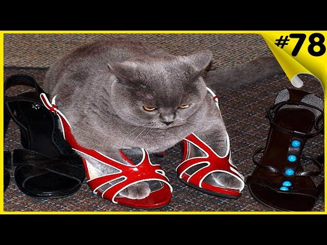 Коты в коробках Коты прячутся и спят в укромных местах Приколы с котами!