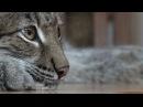 Человек и кошка: история настоящей спецназовской дружбы.